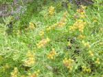 View The Grey Flora Album